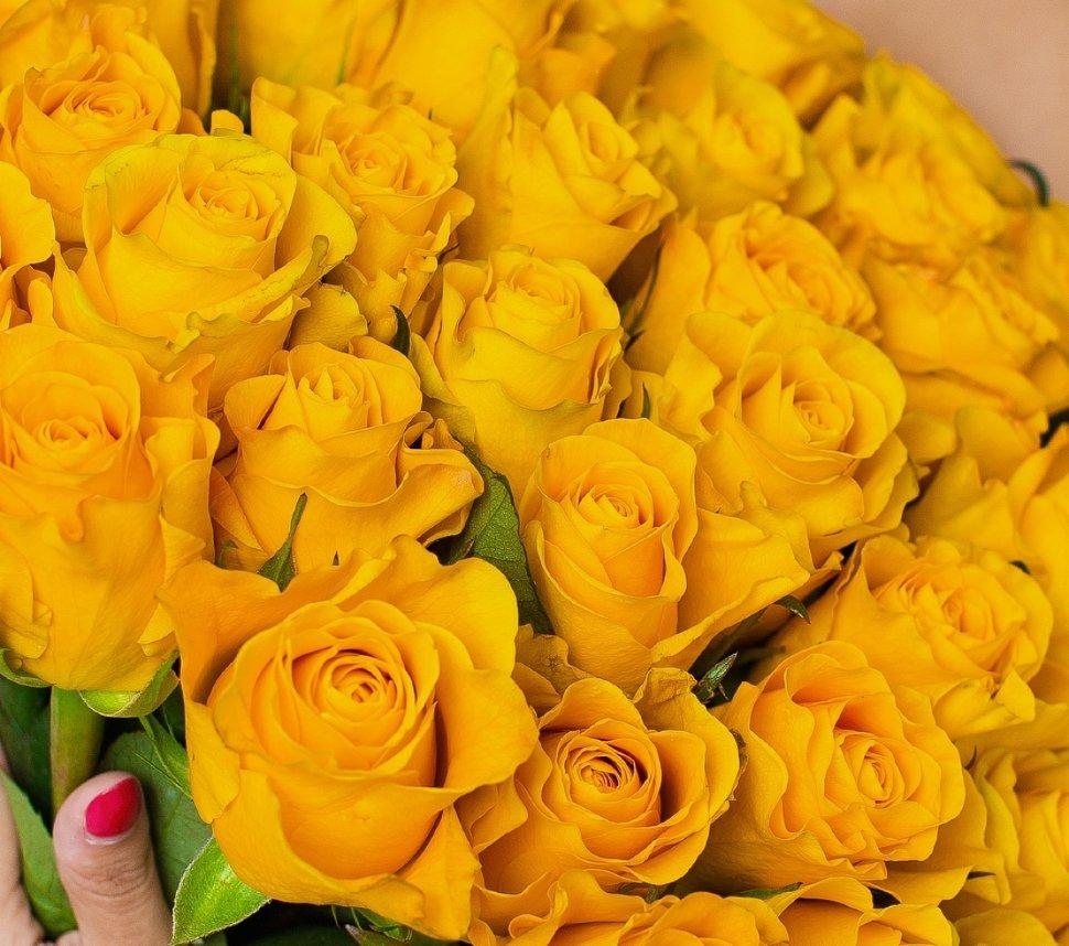 объявлен миллион желтых роз фото салями